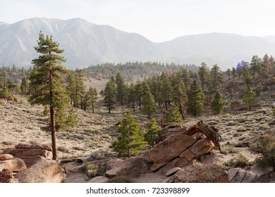 Landscape view of pine trees, mountains, and rocks near Bishop, California.