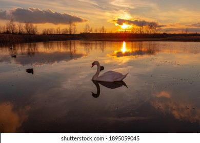 Landscape view of a pond at sunset with a swan in the foreview