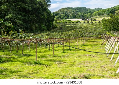 Landscape View of Royal Agricultural Station Angkhang, Thailand.