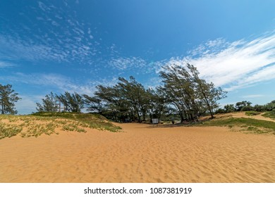 Landscape view of Saint Lucia Beach against vegetated dunes green trees blue cloudy skyline in Kwa-Zulu Natal, South Africa