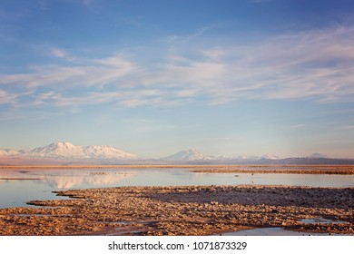 landscape view of salt lagoons with flamingos and andes mountains in los flamencos national reserve in atacama desert, chile