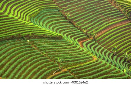 Landscape view of shallot plantation in Majalengka, Indonesia. Terracing