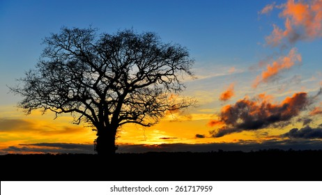 Landscape View of a Silhouetted Oak Tree against a Beautiful Sky at Sunset
