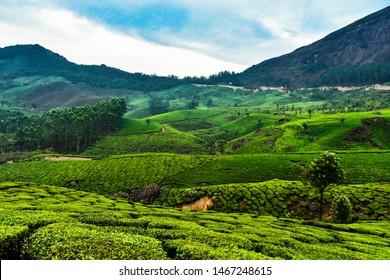 Landscape view of the tea estate of Munnar