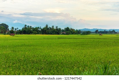 Landscape view of terraced rice field in northern of Thailand