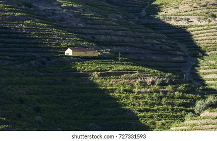 Landscape view of a vineyard in the valley of Douro, Portugal