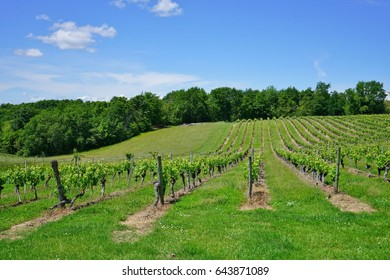 Landscape view of vineyards and green countryside near Cahors, France