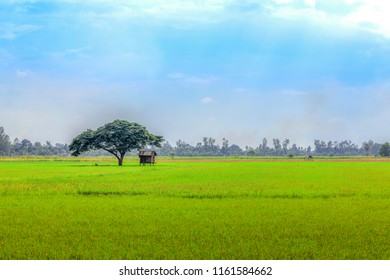 Landscape views, fields and trees, and sky backgrounds.