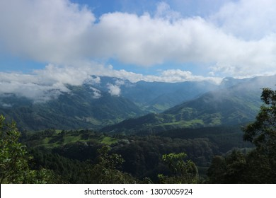 Landscape views over Cocora Valley in Salento, Colombia. The worlds tallest palm trees are scattered across the rolling green hills that disappear into the horizon.