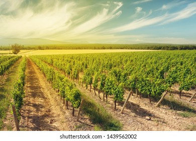 Landscape of vineyard. French countryside valley