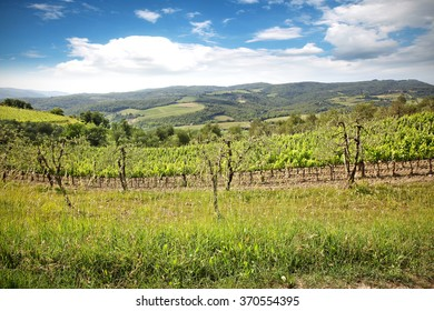 landscape of vineyard and green grass