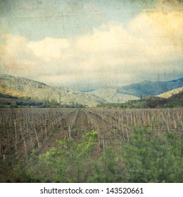 landscape of vineyard - retro style picture
