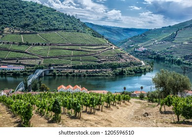 Landscape of a Vineyard valley with a sinuous river crossed by a bridge looked from above in Pinhao, Douro Valley, Portugal