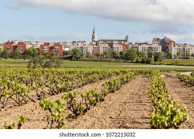 Landscape with vineyards ,at background,city of Vilafranca del Penedes,Catalonia,Spain.