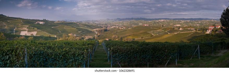 Landscape with vineyards in Langhe, the largest wine region in Piedmont (Unesco World Heritage Site).