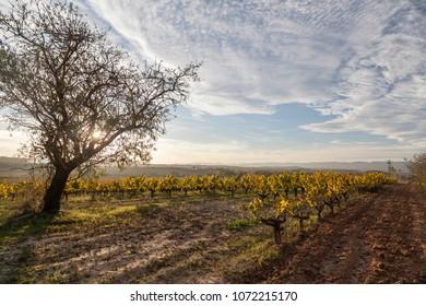 Landscape with vineyards in Penedes wine cava region,Catalonia,Spain.