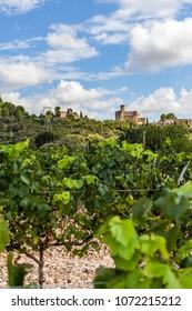 Landscape with vineyards in Penedes wine cava region,at background village of Castellet,Catalonia,Spain.