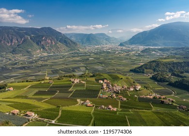 Landscape with Vineyards in South Tyrol near Bozen, Nortehrn Italy
