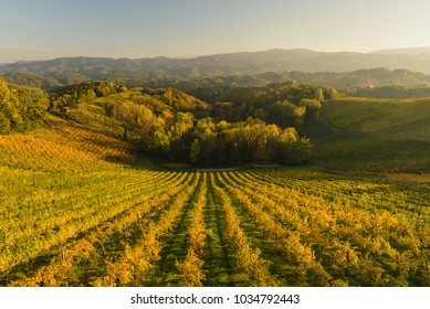 Landscape with vineyards at sunset in South Styria (Stajerska) .Border Austria-Slovenia.