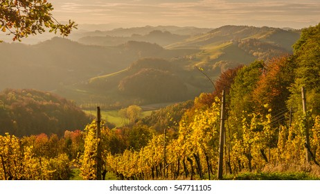 Landscape with vineyards at sunset in South Styria (Stajerska) . Austria-Slovenia border