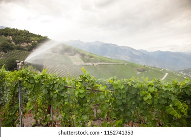 landscape with vineyards in the the swiss canton of wallis or valais near sierre and sion