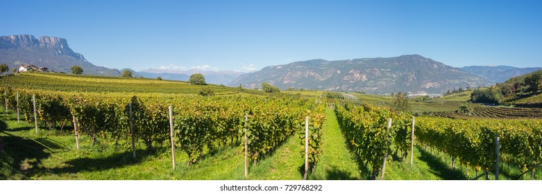 Landscape of the vineyards of the Trentino Alto Adige in Italy. The wine route