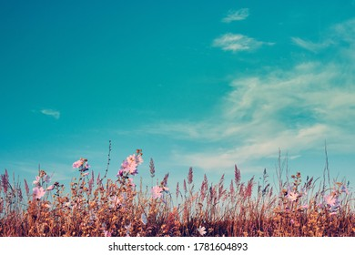 Landscape vintage nature background of summer flower field with sunlight blue sky. Vintage color tone. Image with space for text. Samara, Russia.