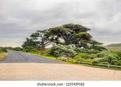 Landscape in Western Cape province of South Africa: a road to Cape of Good Hope and blooming red aloe vera under the tree.