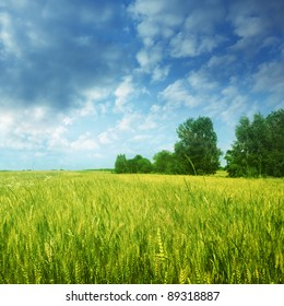Landscape with wheat field and cloudy sky.