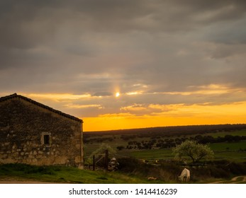 Landscape with a white horse on a farm in the dehesa in Spain during sunset