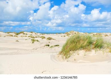 Landscape wild dunes in front of empty beach at Dutch island Terschelling