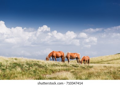 landscape with wild horses near the mountain beautiful sky