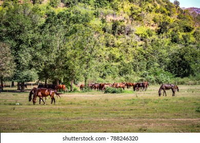 landscape of Wildlife of group of horses in green grass field with trees and mountain background