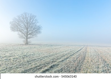 Landscape in Winter in England, the UK, foggy and cold crisp morning with sunlight.