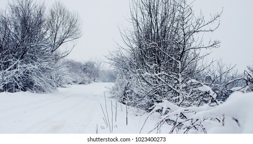 Landscape of winter nature with trees, trees, field with snow