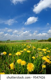 Landscape wity yellow flowers and a blue and cloudy skay.