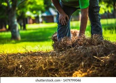 A landscape worker laying out new pine straw in a flower bed