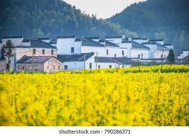 Landscape of Wuyuan County with Yellow oilseed rape field and Blooming canola flowers in spring. It's very quiet. People refer it to as the most beautiful village of China.