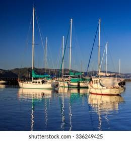 landscape with yachts- destination Wellington, North Island, New Zealand