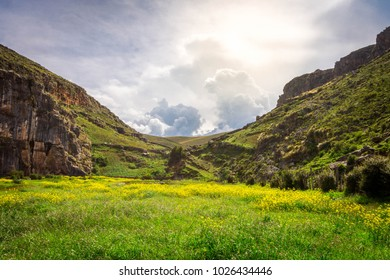 Landscape of yellow flowers in the field (Ayacucho - Peru)