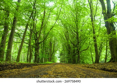 landscape of young grey forest with green trees, nature series