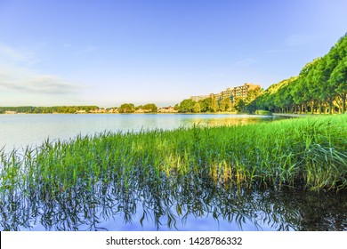 Landscape Zegerplas, Alphen aan den Rijn, with Reed border in focus and blurred background with buildings in warm yellow light of Sunrise against blue sky