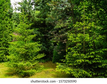 Landscaped garden with evergreens. Spring landscape with boxwood bushes, Abies koreana fir, Hootsman juniper, Japanese pine Glaua and western thuja. Atmosphere of peace and tranquility.