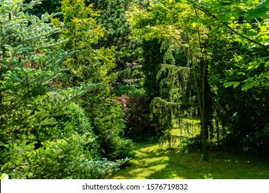 Landscaped garden with evergreens. Spring landscape with boxwood bushes, Hootsman juniper, Japanese pine Glaua and western thuja. Atmosphere of peace and tranquility.
