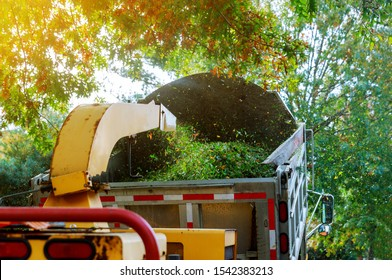 Landscapers using wood chipper in chipper mulcher chips into the back of a truck.