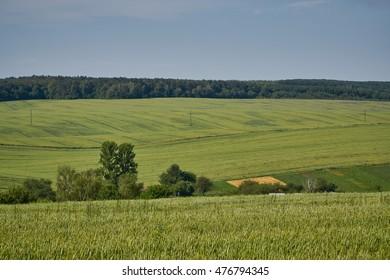 Landscapes crop fields.
