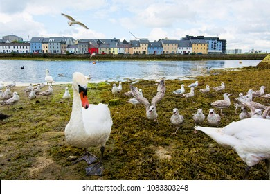 Landscapes of Ireland. Galway city and Corrib river