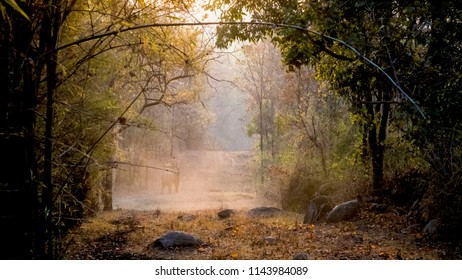 landscapes from jungle book forest. This is Kanha National Park, Madhya Pradesh, India