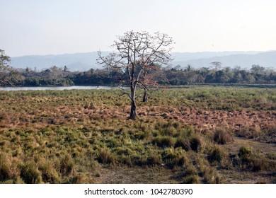 Landscapes of Kaziranga National Park