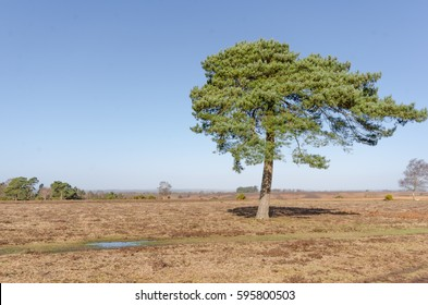 Landscapes near Appleslade Inclosure in the New Forest National Park